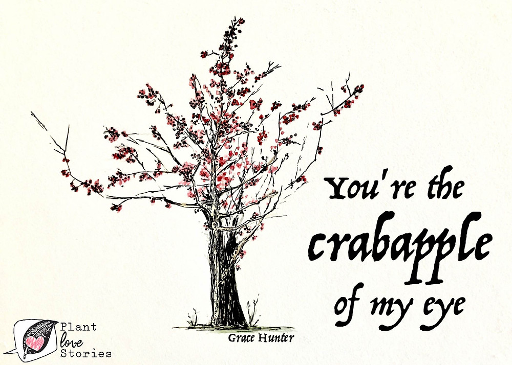 "Illustration of a crabapple tree with the words ""You're the crabapple of my eye"""