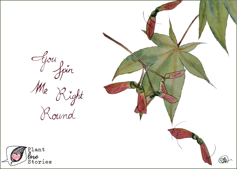 "Illustration of a maple leaf and maple samara with the words ""you spin me right round."""