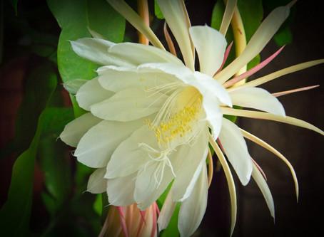 The Cinderella of Plants