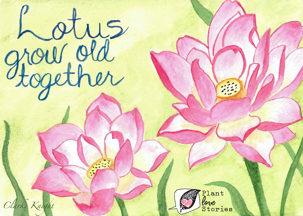 "Illustration of lotus flowers with the words ""lotus grow old together"""