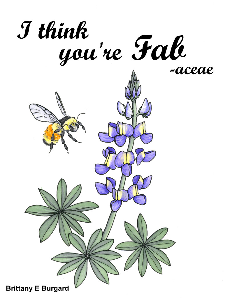 "Illustration of a lupine with the text ""I think you're fab-aceae"" (Fabaceae is the plant family with lupines)."
