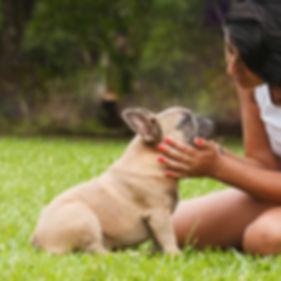 Bulldog Francês com Família - Buldogue Francês - Frenchie - Bulldog French
