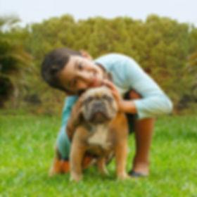Bulldog Francês com criança - Buldogue Francês - Frenchie - Bulldog French