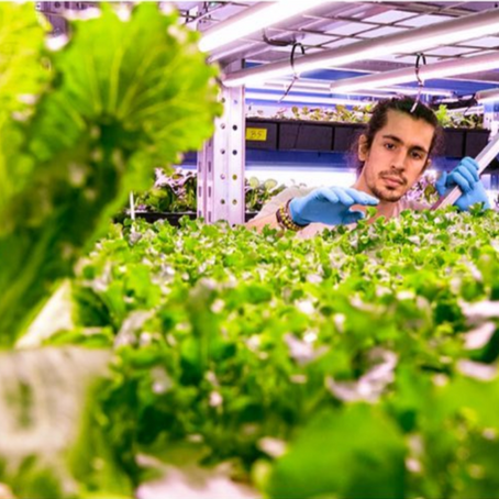 Vertical farming's mission to localize, decarbonize and democratize food production