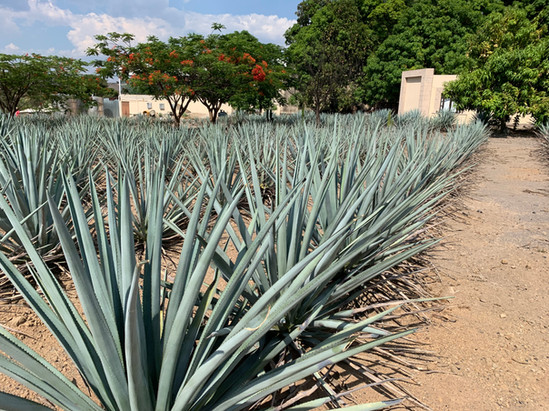 Hotel Boutique Tequila