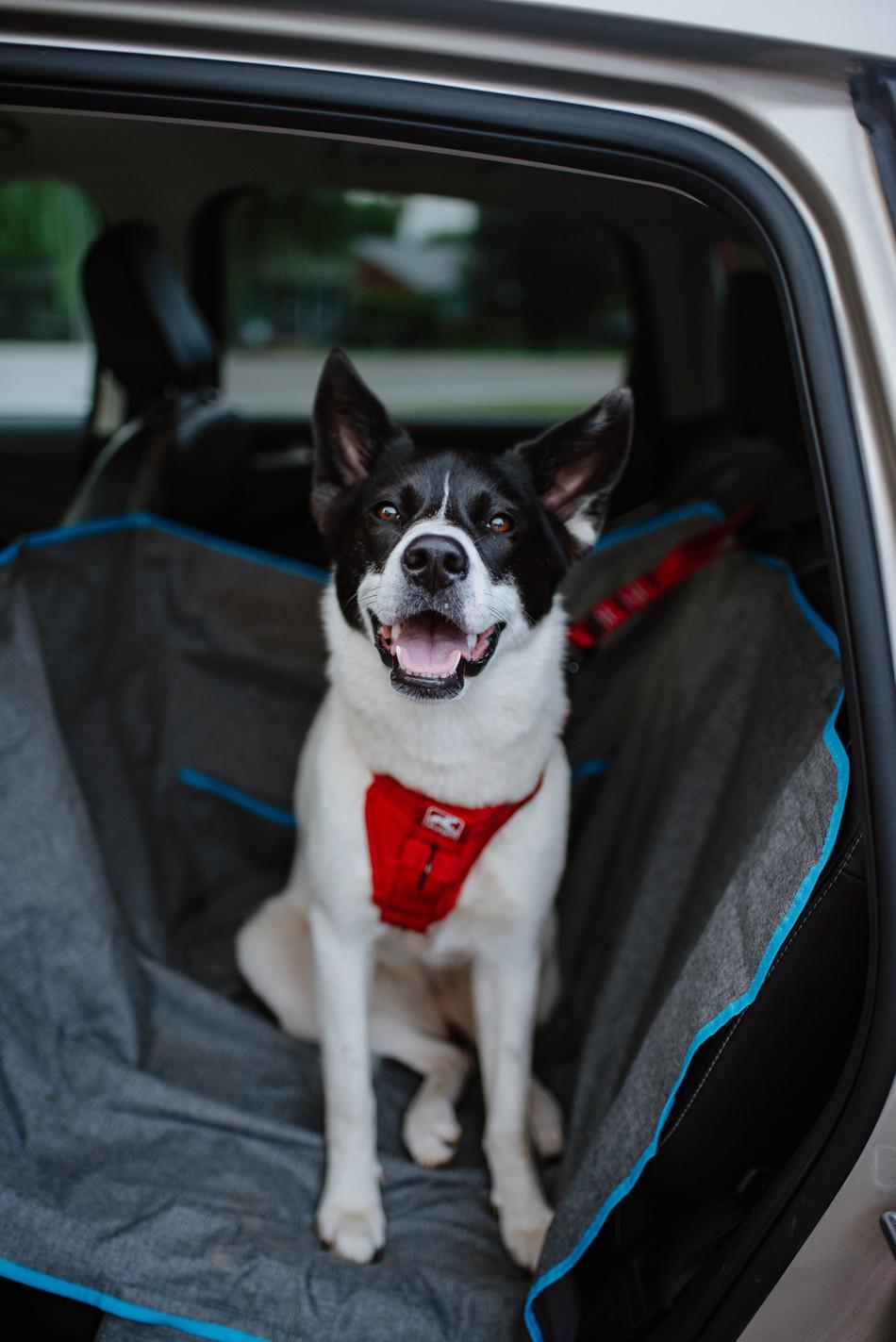 Kurgo Car Harness