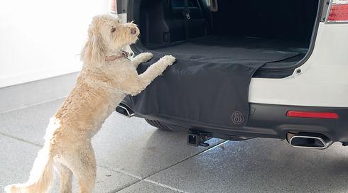Dog_Paws_on_SUV_edited_edited_edited.jpg