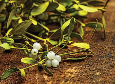 Target Cancer - with European Mistletoe
