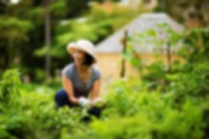 Volunteer-gardener-at-Vaucluse-House-Sydney.jpg