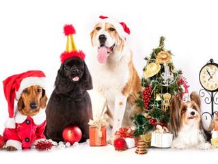 Celebrando Navidad Junto A Tu Mascota