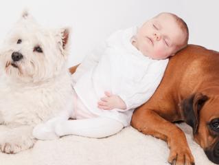 Mascotas y Bebés!!