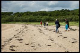 Loch Fyne Beach