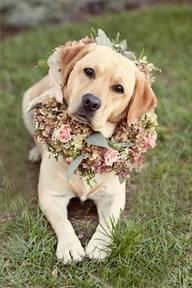 Animais de Estimação no Casamento <3