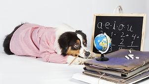 chien_animaux_au_boulot_zooéducation