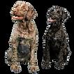 CACH-Dogs-No-BG%2520(3)%2520(2)_edited_e