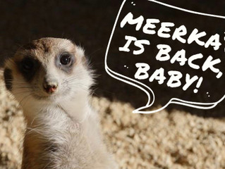 The Meerkats Are Back!