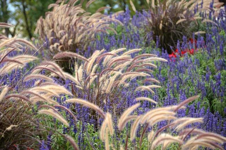 botanikfoto-517465-L.jpg