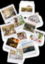 Safari Company polaroid collection Ololo