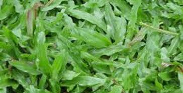 Axonopus compressus (Zimbabwe grass)
