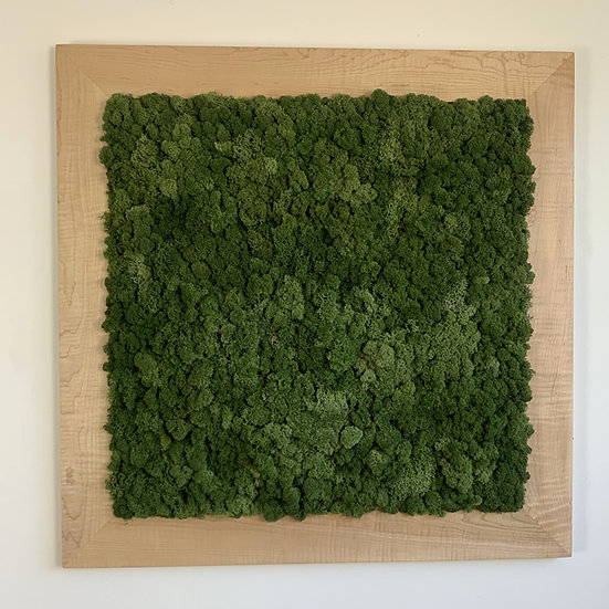 Curly Maple Frame Moss Art