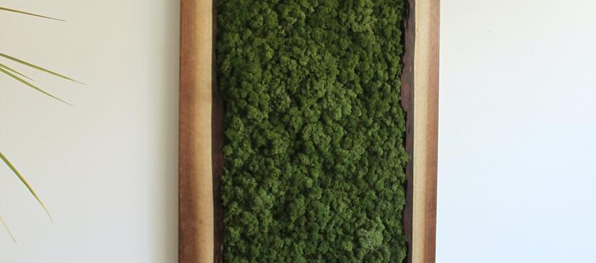 Live Edge Walnut Frame Moss Art