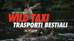 Wild taxi