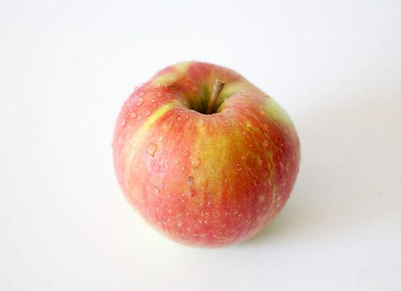 BC Apples, Honey Crisp