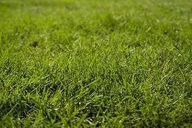 Grass detail.jpg