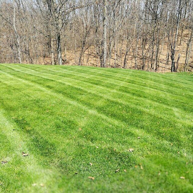 Lettrich Grass Striping 2.JPG
