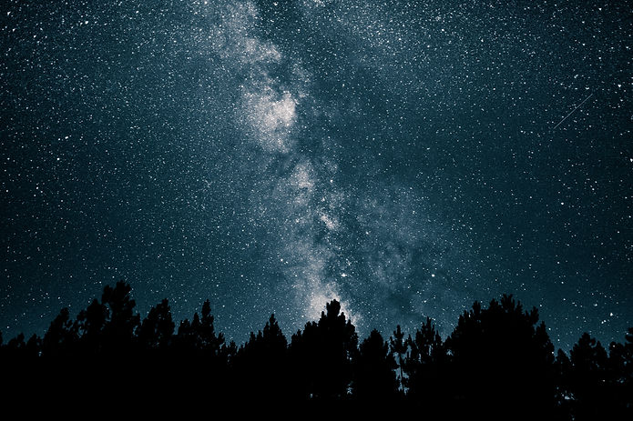 Forest trees in front of a starry night sky