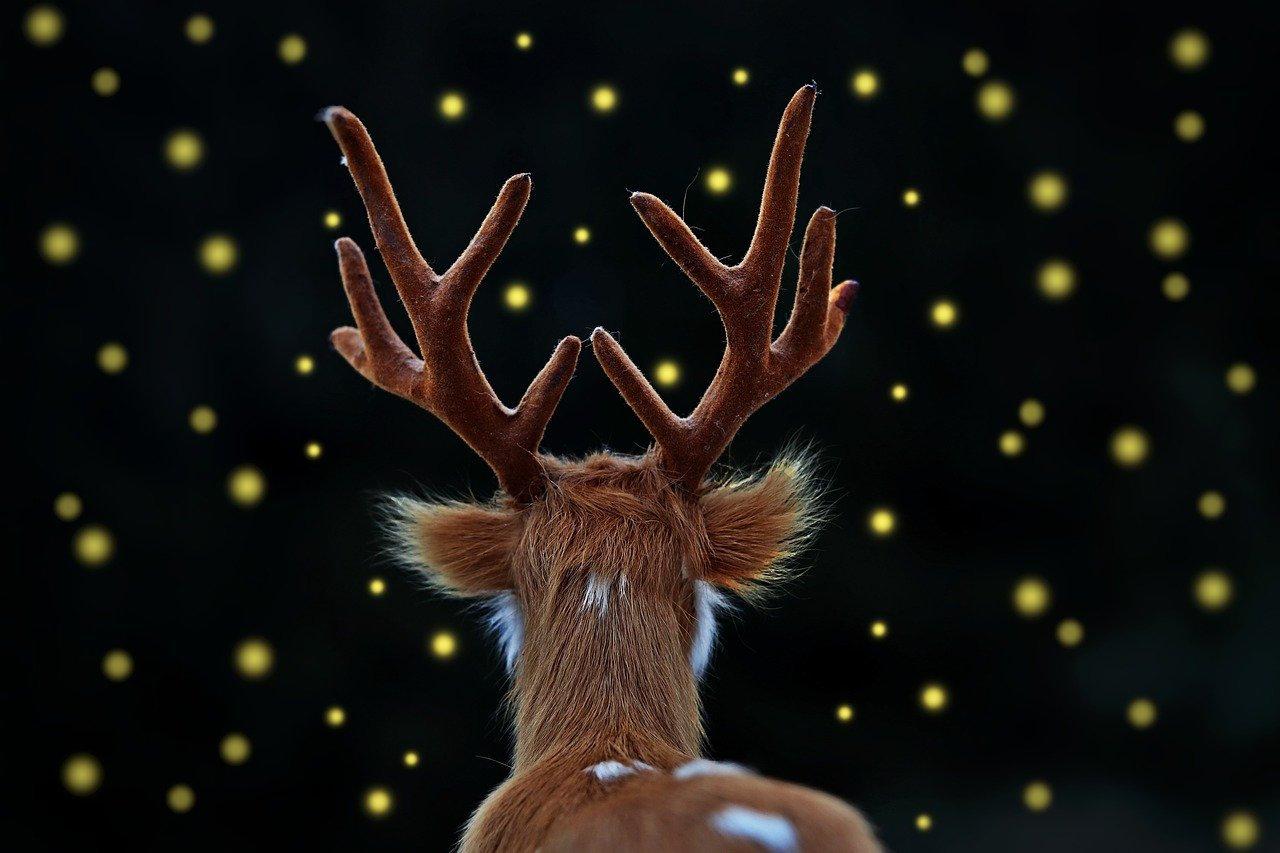 fallow-deer-3953217_1280.jpg