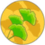 Ginko Leaves.jpg