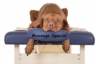 dogmassage2.jpg