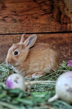 Les lapins de Fouillouse (non comestibles)