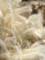 wool-2439392.jpg