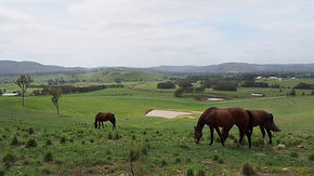 View over Tocal wit horses in foregrond