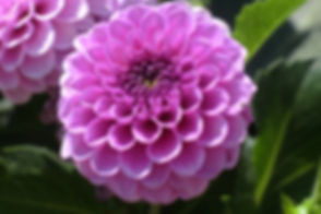 state-garden-show-3621961.jpg