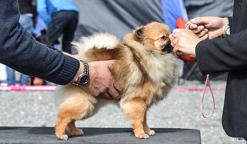 dog-show-3753732_edited.jpg