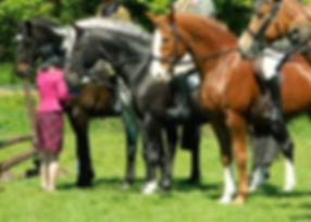 horse-71083_edited.jpg