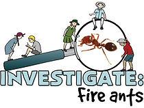 Investigate Fireants kids.jpg