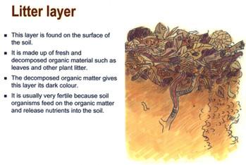 litter layer.jpg