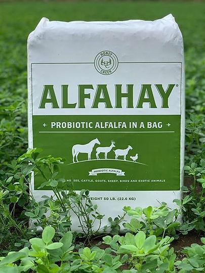 Alfahay.jpg