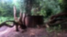 Bäume_und_Tonne.jpg