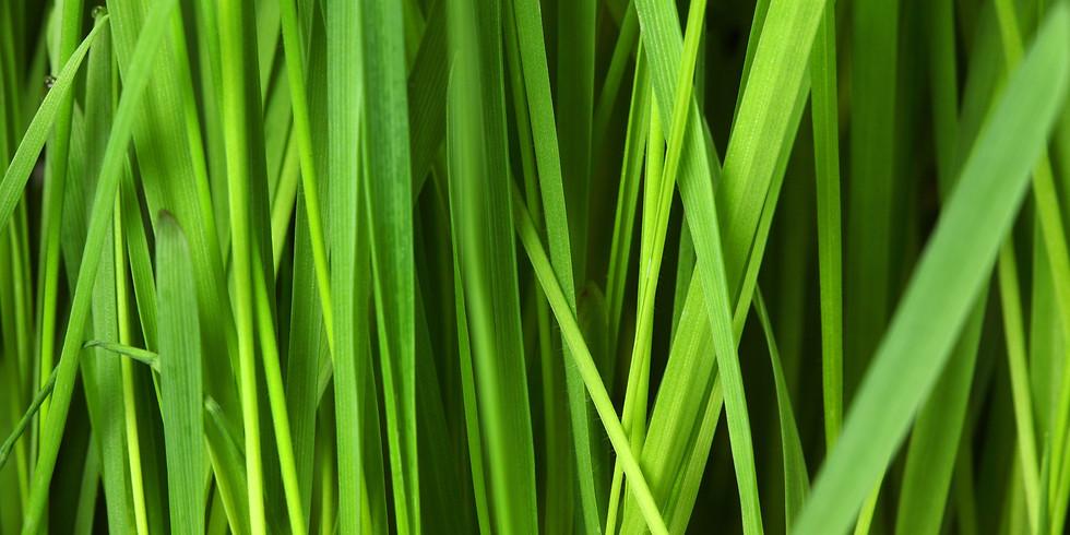Wir hören das Gras wachsen - Vol. 2