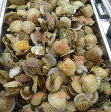 North Atlantic Seafood (6)