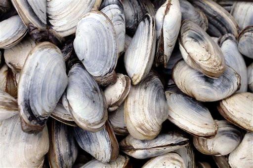North Atlantic Seafood (3)
