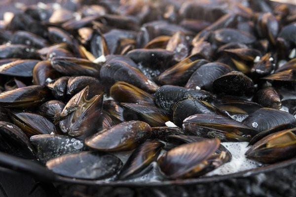 North Atlantic Seafood (4)