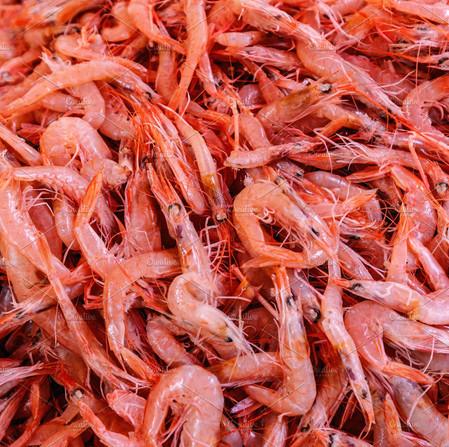 SHELL FISH (7)