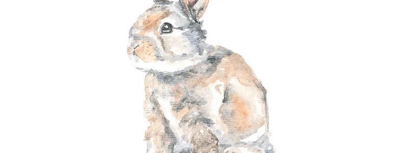 Acuarela conejo