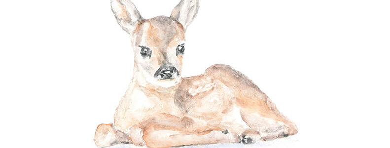 Acuarela Bambi